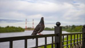 В Кировской области ожидается потепление и кратковременный дождь