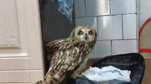 Кировские волонтеры из Центра «Большое гнездо» рассказали, каким птицам нужна помощь