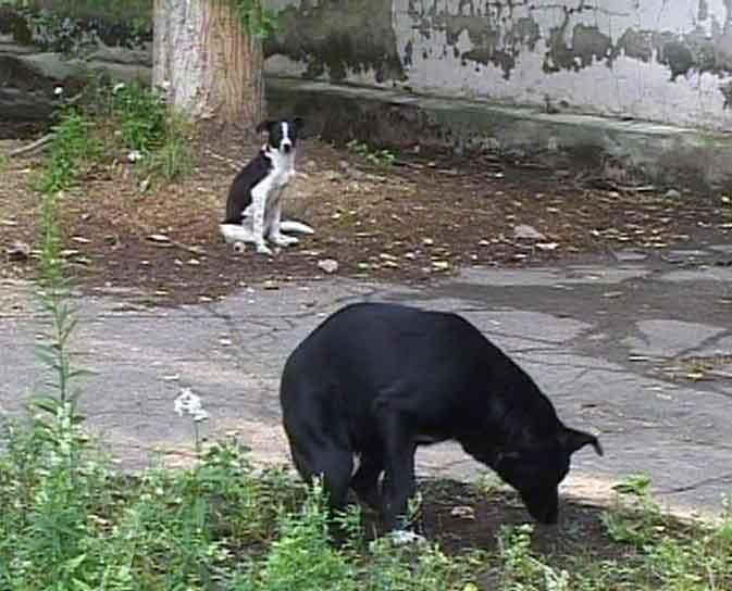 Человек собаке друг!. Или враг?
