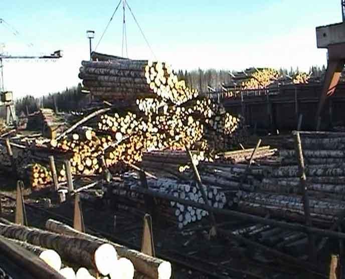Осенний кризис лесозаготовителей