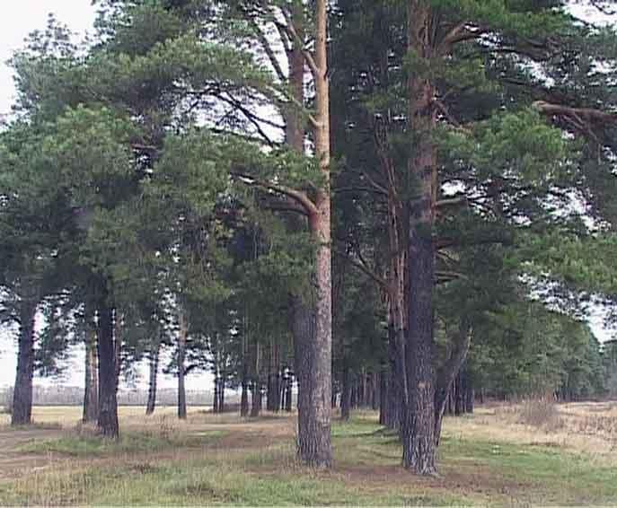 Новая редакция лесного кодекса России