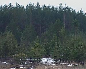 С 1 января вступает в силу новый Лесной кодекс