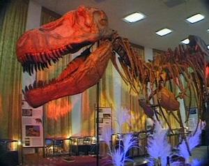 Котельнический палеонтологический музей станет филиалом областного