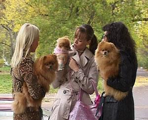 Кировские собаки - лучшие в России и Европе