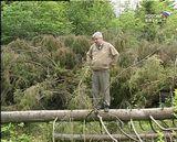 К Дню эколога: на страже вятских лесов