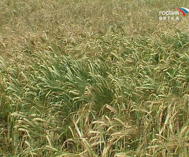Новое удобрение повысит урожайность полей