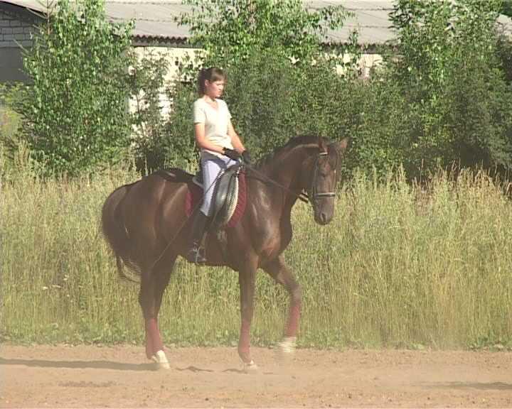 Подготовка к чемпионату области по конному спорту