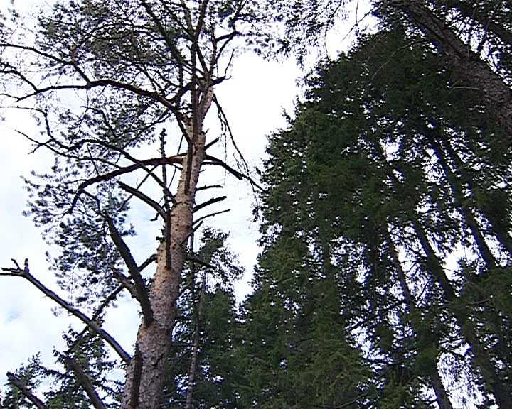 Зелёная зона - особо охраняемая природная  территория