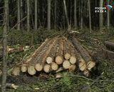 Лесной комплекс под пристальным вниманием депутатов