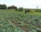 Истобенск – огуречная столица