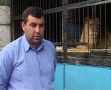 В Кирове родились тигрята