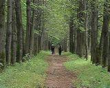 Уникальный парк на территории областного центра