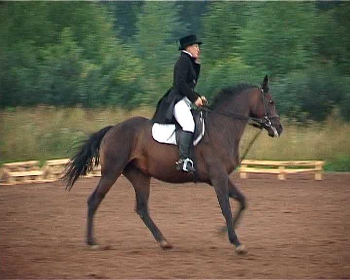 Областные соревнования по конному спорту