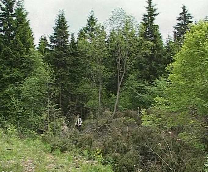 Итоги  работы по сохранению лесов