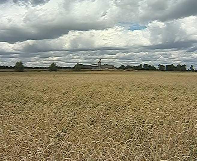 Заготовка кормов на полях области