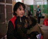 «Планета обезьян» в Кирове