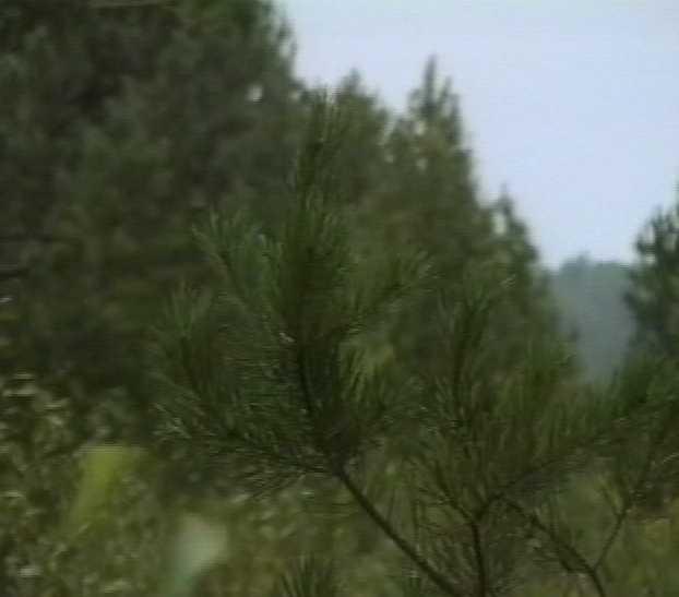 Вопросы лесопользования - на контроле государства