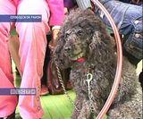 100 лет памятнику собаке в поселке Бобино