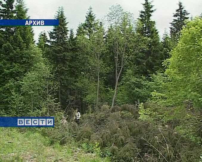 Выявлен факт незаконного завладения государственным лесом