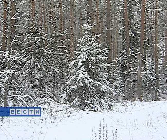 Штраф за незаконную вырубку деревьев увеличился