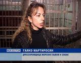 Морские львы в Кировском цирке