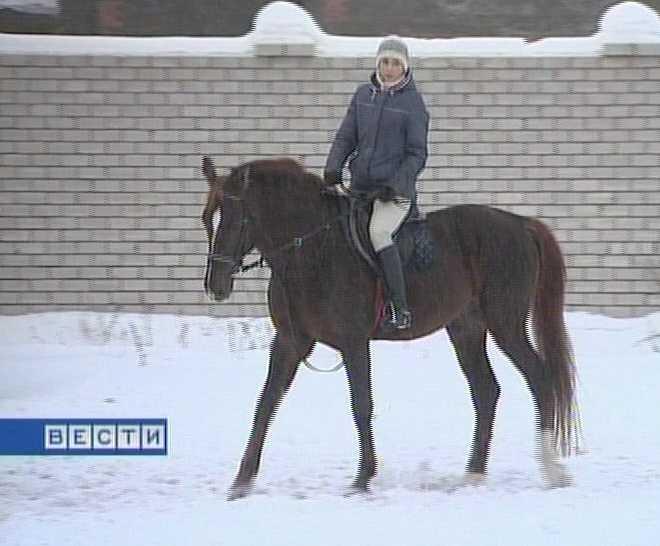Перспективы конного спорта