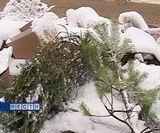 Новогодние елки на свалке