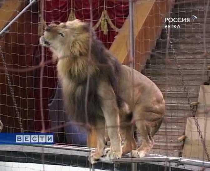 Львы в городе