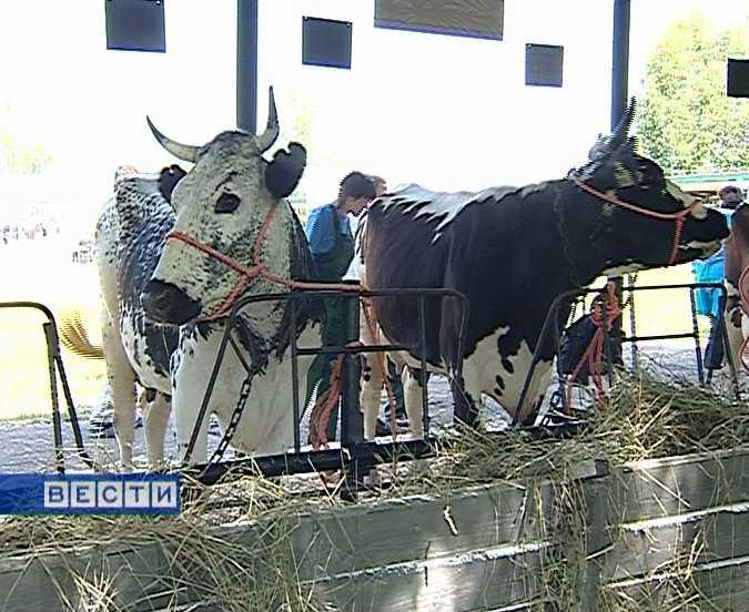 Выставка сельскохозяйственных животных