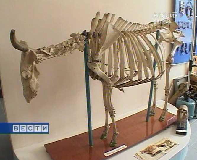 Обновленный музей ветеринарии