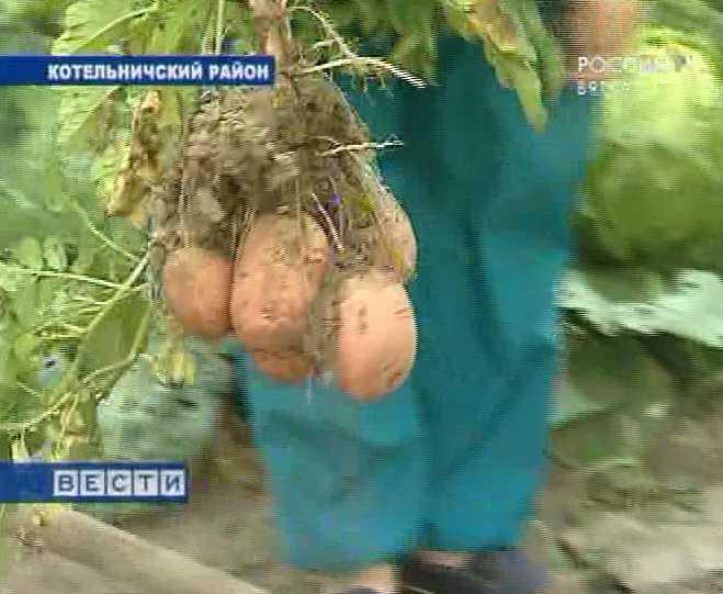 Вятская картошка