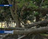 Опасные деревья