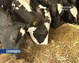Карусель для коров
