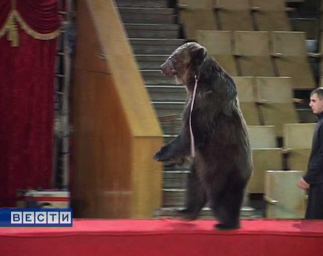 Медведи в кировском цирке