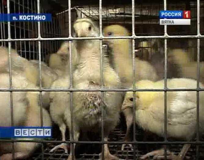 Вакцина для домашней птицы