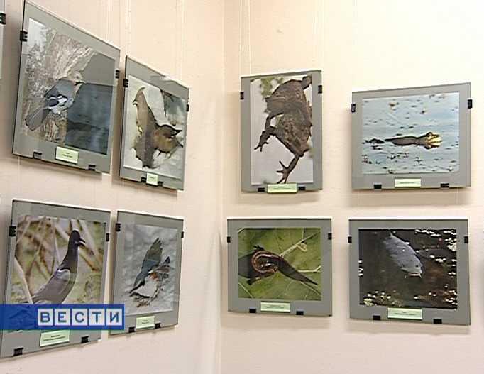 Выставка фотографа Владимира Арбузова