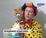 Театр кошек