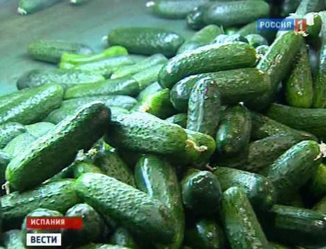 Опасные овощи