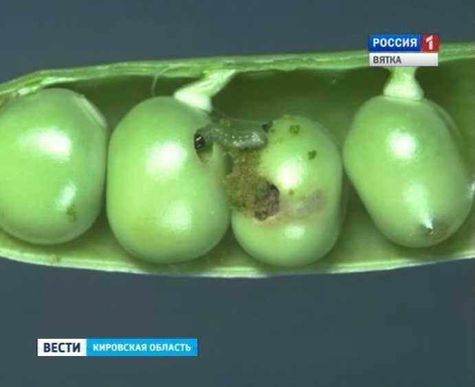 Вредители-плодожорки