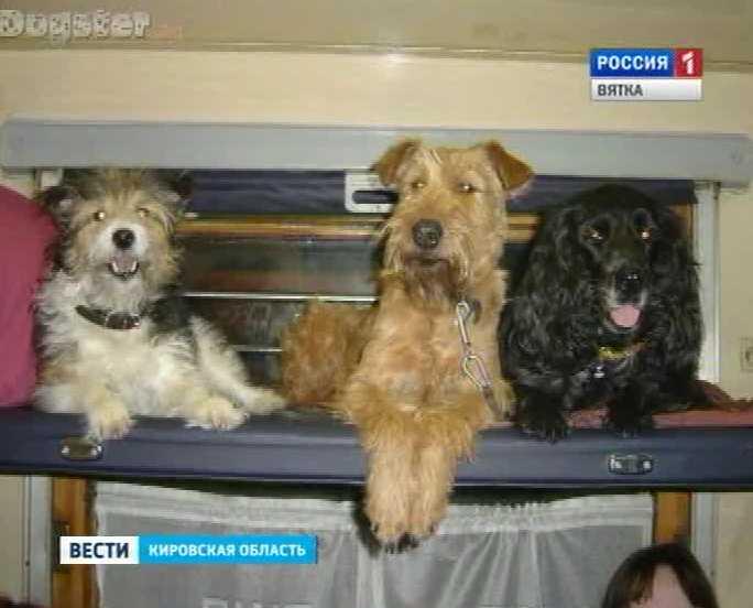 Животные в транспорте
