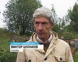 В Куменском районе погибли пчелы