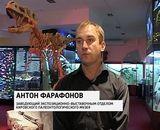 Гнездо динозавра