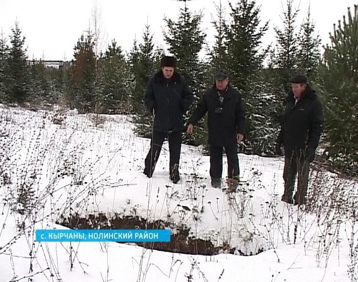 Куда пропали елки?