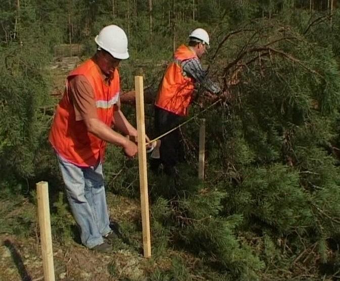 Итоги работы департамента лесного хозяйства