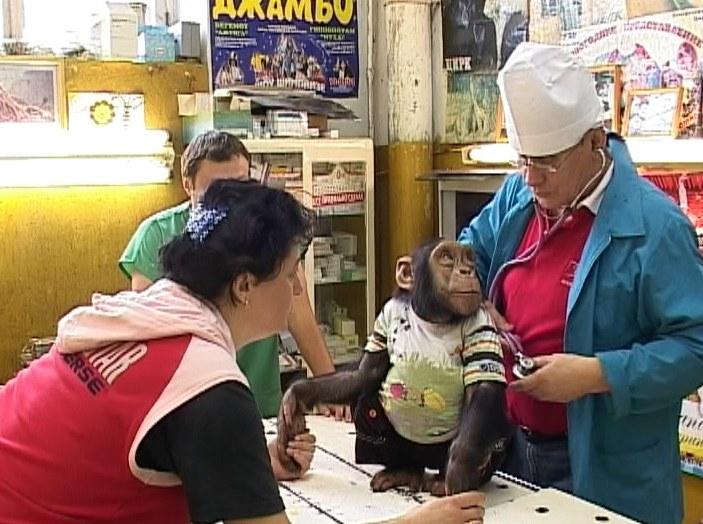 Ветеринарный врач Валерий Соболев