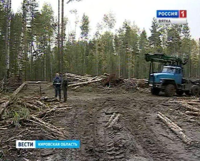 Аренда лесов