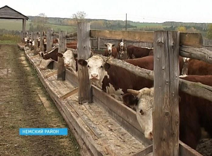 Мясное скотоводство