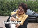 Приют для животных «Зоокоролевство»