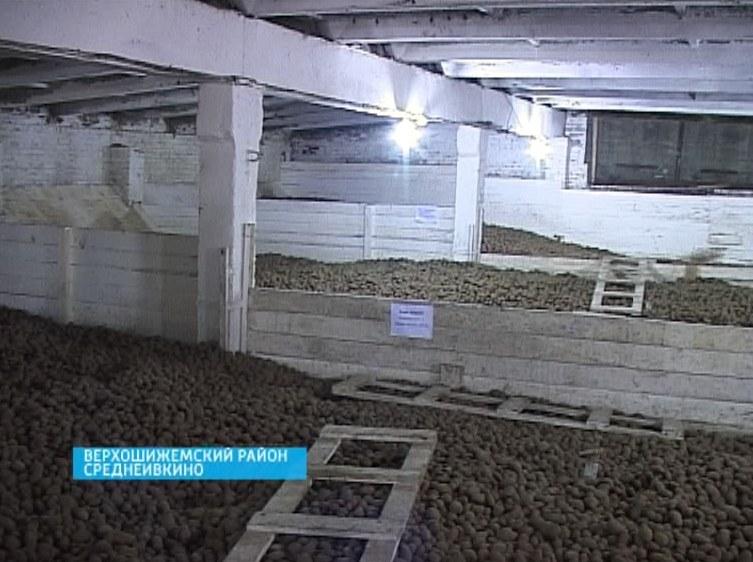 Контроль за хранением семенного картофеля