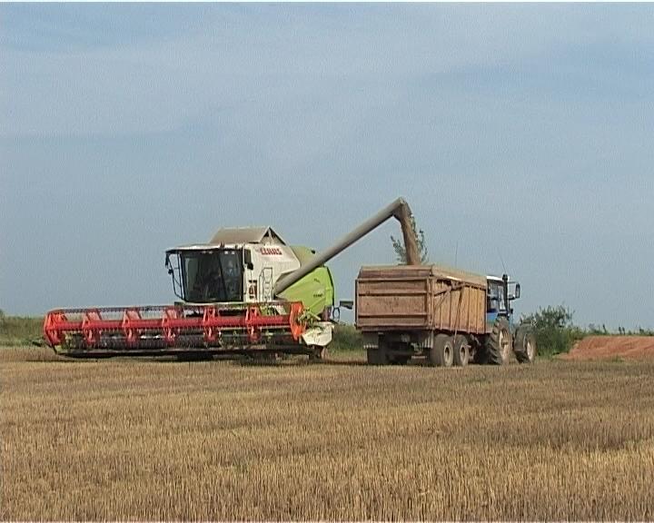 Уборка пшеницы в Башарово
